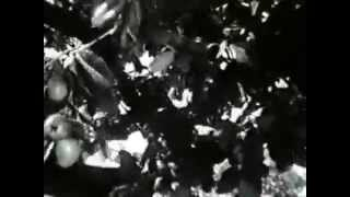 The Private Lives of Adam and Eve 1960 Full Movie