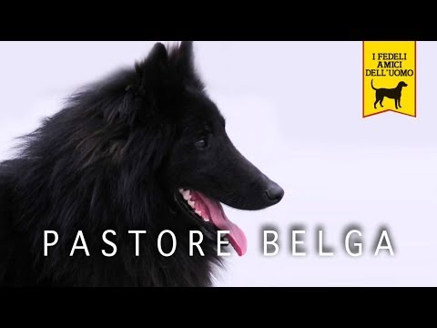 PASTORE BELGA trailer documentario