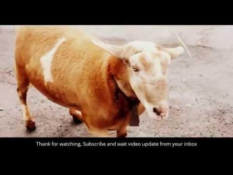 Xxx Mp4 Funny Animals Videos Animal Attrack Sexy Girl 3gp Sex