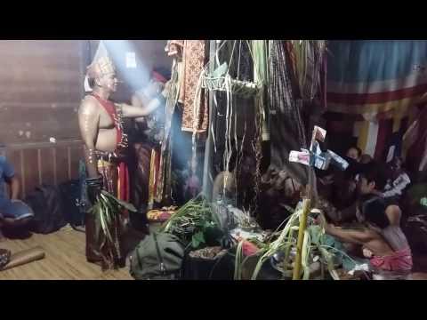 Xxx Mp4 Dayak Maanyan Balianbehajat True Culture Starts Here 3gp Sex