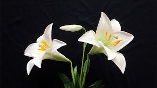 ABC TV   How To Make Easter Lily From Crepe Paper - Craft Tutorial