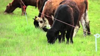 INIA TAMEL AIKE - Sistemas ganaderos en la región de Aysén