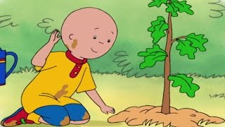 Caillou Full Episodes   CAILLOU PLANTS A TREE   4 HOUR MEGA COMPILATION   Cartoons for Children
