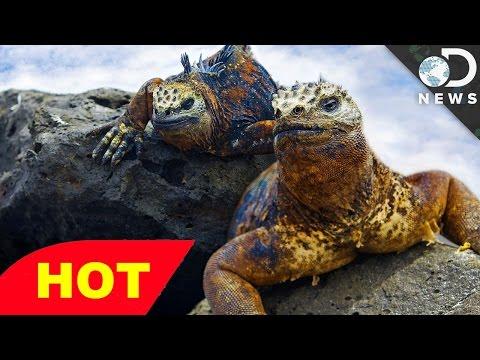 THE EVOLUTION OF SHAPE NOVA EVOLUTION DOCUMENTARY Discovery Animals Nature documentary