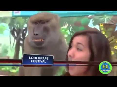 Xxx Mp4 Funny Videos 2016 Cute Animals Teasing Hot Girls 3gp Sex