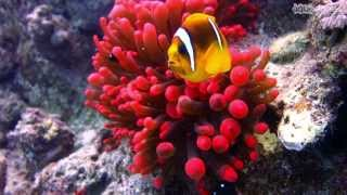 The beautiful underwater world of the Red Sea - Highlights || 4 ||