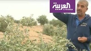 إسرائيل تجرف أراض زراعية للفلسطينيين