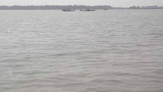 Dolphins at Chilika Lake