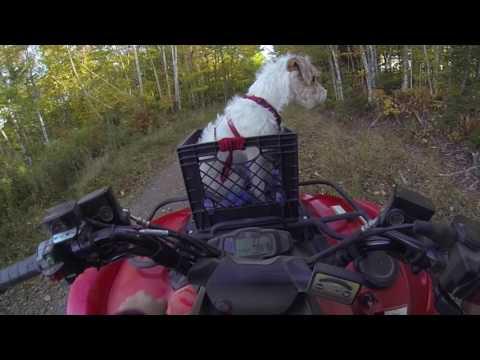 Xxx Mp4 Thanksgiving 16 Ride 1 ATV 1 Dual Sport 2 SXS And 2 Dogs 3gp Sex