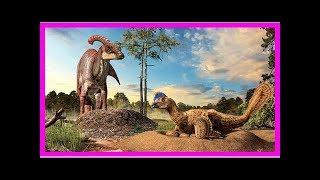 Missing link between dinosaur nests and bird nests