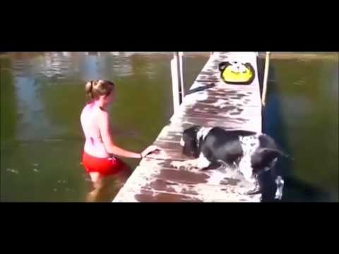 Dog vs Women Very Funny 2016