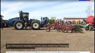 В Приамурье увеличат производство продовольственной пшеницы на экспорт