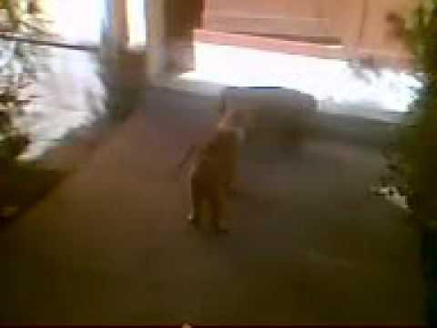 kavga eden kediler.3gp