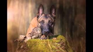 Ovo jednostavno morate vidjeti: Nevjerojatno prijateljstvo psa i sove!