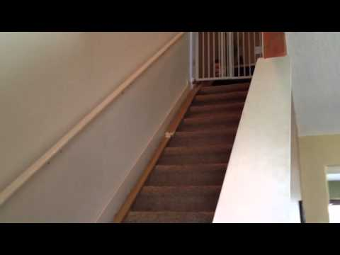 Xxx Mp4 Homemade Hot Wheel Track 16 Feet Long With Jump 3gp Sex