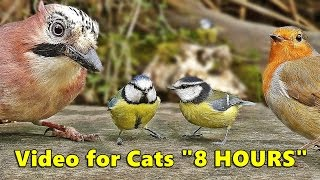 Cat Entertainment Videos : Video for Cats To Watch Birds : ULTIMATE 8 HOURS