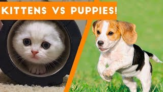 Try Not to AWW! at These Cute Kittens and Funny Puppies | Funny Pet Videos