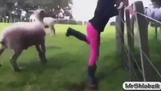 Fanny animals ....:D....hahaha