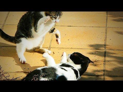 Xxx Mp4 Bully Cats Funny Cats Full Funny Pets 3gp Sex