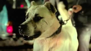 Sivas Filmi ( Kaan Mujdeci ) Extended Trailer 2014