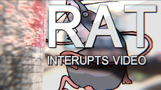 RAT INTERRUPTS VIDEO