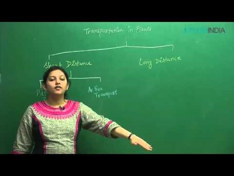 Transportation In Plants by Shivani Bhargava (SB) Mam (ETOOSINDIA.COM)