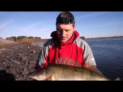 видео ловля судака волгоград