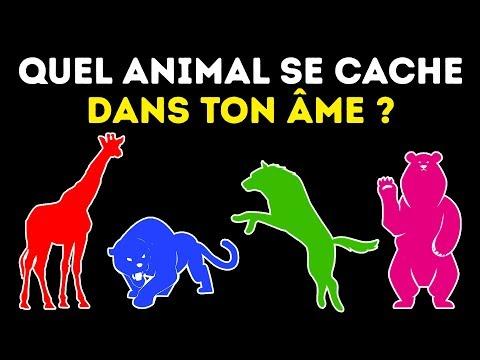 Quel Est Ton Animal Totem Un Test de Personnalité