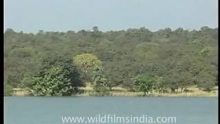 Important Bird Area - Dihaila Jheel at Karera Wildlife Sanctuary, Madhya Pradesh
