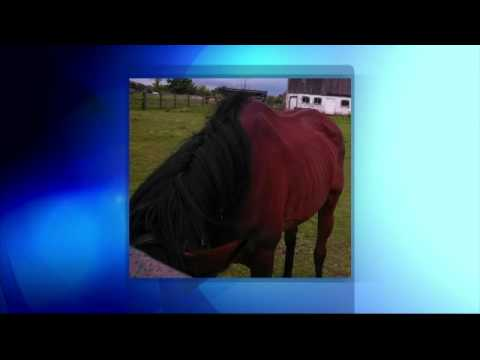 Woman reunited with her horse after extensive search