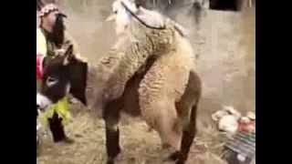 mout dyal dahk maroc 2013