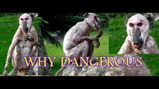 Today Live Mysterious Danger Animals News in Odisha (ନିଆଳି).