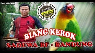 KISAH SUKSES : Menguak !! Lovebird Glodokan BIANG KEROK Menjadi Burung Nasional, Dian Eot Sadewa BF