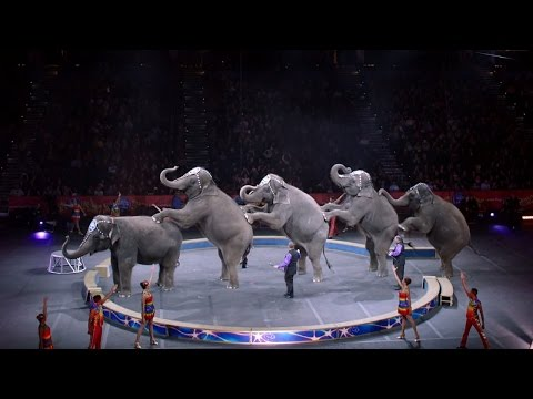 Why Zoos Are Targets For Closure After 'Greatest Show On Earth' Ends