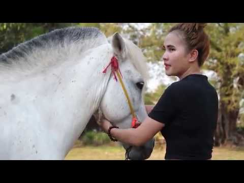 Xxx Mp4 Lovely Girl Playing With Horse How To Teach Your Horse To Lay Down 3gp Sex