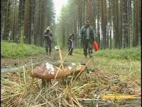 ловля охота поиск кого либо