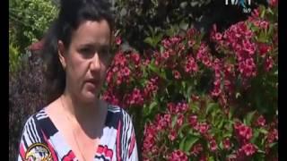 Bianca Stefanoiu  Weigela Florida Pepiniera Peris