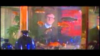 The Look of Love - Casino Royale~ハーモニカ~Chromatic Harmonica