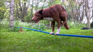 Quick Dogy Handstand on Rope