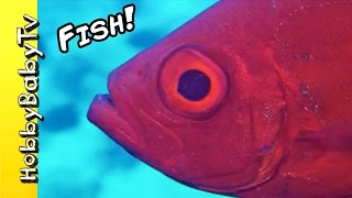REAL SURPRISE FISH! Learn Colors with Fishy