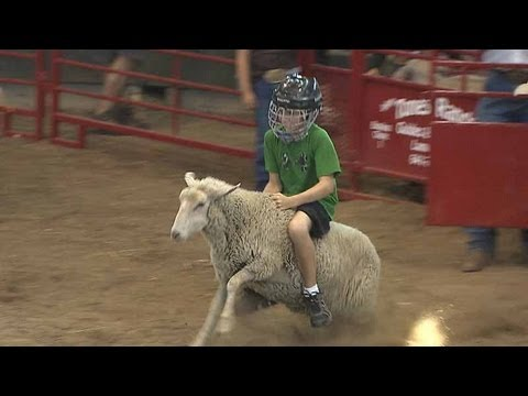 Mutton Busting Iowa State Fair 2012