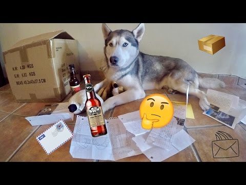 SOMEONE SENT US DOG BEER First Fan Mail Ever Q&A
