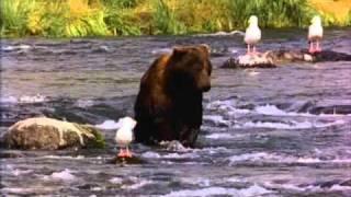 www.bear.com
