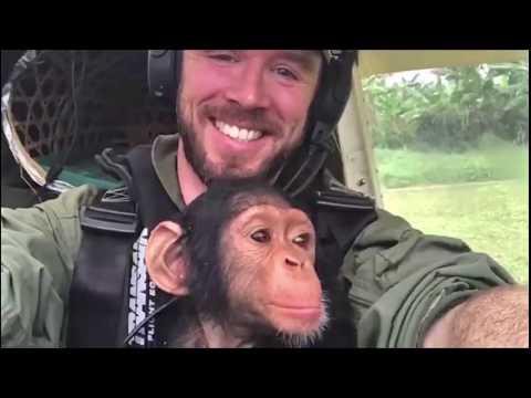 Xxx Mp4 Pilot Rescues Baby Chimp In Zenith STOL 3gp Sex