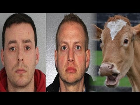 Man Caught Having Sex with Cow @hodgetwins