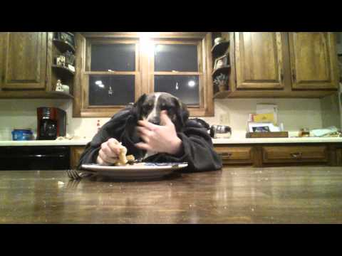 Two Dogs Dining *Remake* with ONE dog ft.Solo
