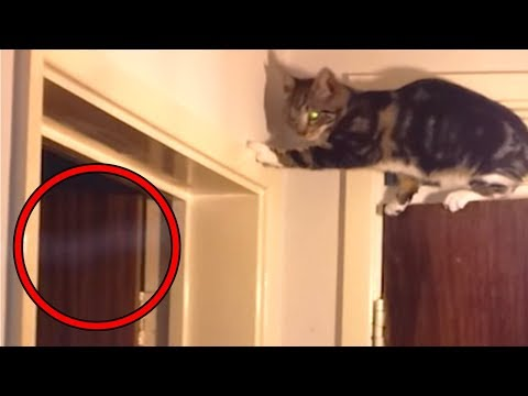 Xxx Mp4 Top 15 Scary Ghost Sightings By Pets Caught On Tape 3gp Sex