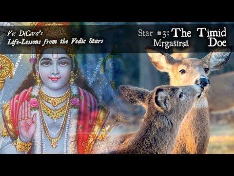 Xxx Mp4 The Timid Doe Life Lessons From Vedic Star Mrigashirsha 3gp Sex