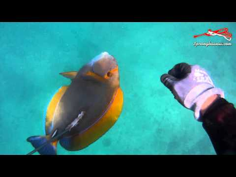 3 Prong Hawaii 3 Prong & Gun Action Featuring Lane Tsujiguchi Clip 14 Summer 2013
