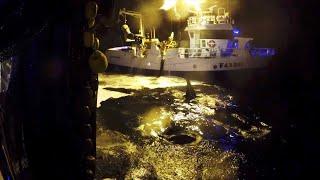 Her får fiskerne spektakulært besøk